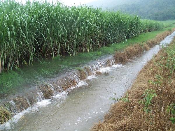 Cây cối, động vật thủy sinh có thể chết hàng loạt nếu sống trong môi trường ô nhiễm bởi nước thải từ bệnh viện