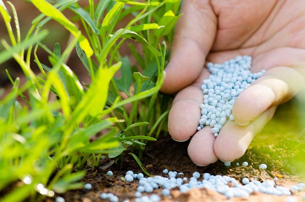 Potassium và ứng dụng trong ngành sản xuất phân bón nâng cao chất lượng mùa vụ