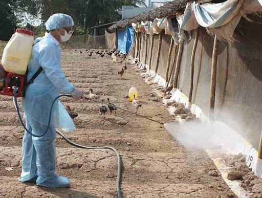 Sử dụng trong khử trùng chuồng trại vật nuôi