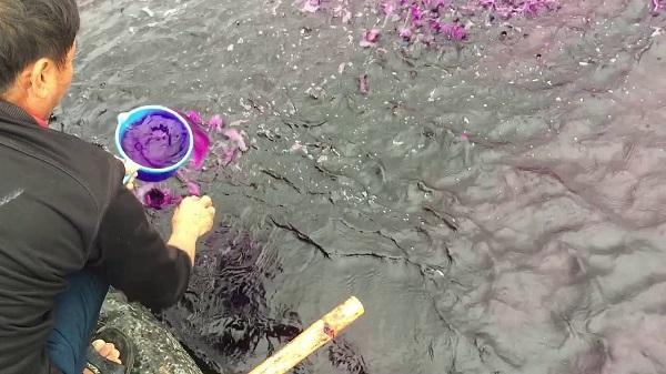 Thuốc tím dùng trong các ao hồ nuôi cá