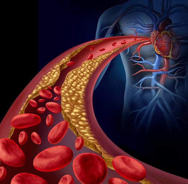 Cholesterol giúp mọi hoạt động của cơ thể người hoạt động