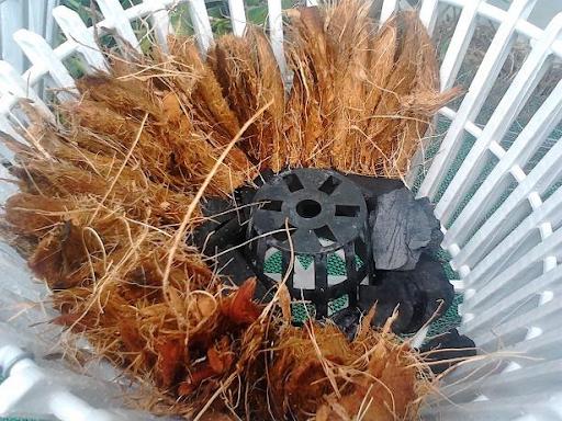 Lọc nước nhiễm phèn bằng xơ dừa được sử dụng nhiều tại các tỉnh miền Nam
