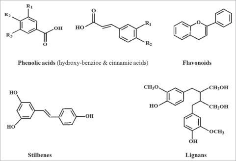 Cấu tạo hóa học giải thích Polyphenol là gì