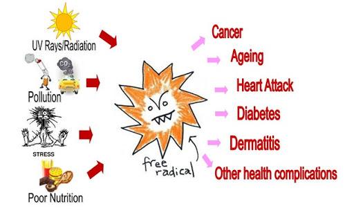 Reactive oxygen species là nguyên nhân lớn gây bệnh tim mạch, ung thư