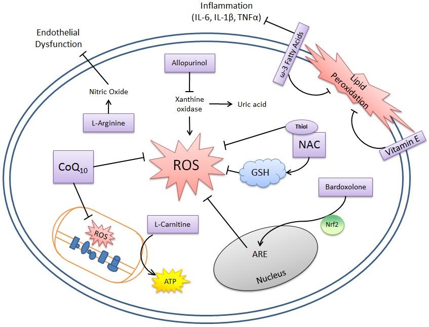 Reactive oxygen species là tổng hợp các chất có hại cho cơ thể