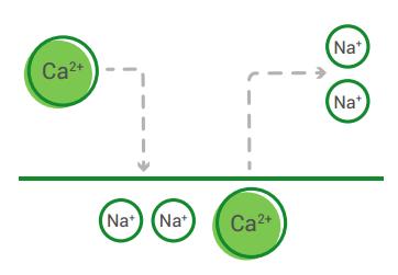 Hạt nhựa trao đổi ion giải phóng 2 Na+ và giữ lại 1 Ca2+ khi tiếp xúc, quá trình hoàn nguyên diễn ra ngược lại